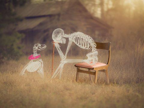 Man Skeleton Dog Skull Spooky  - BiancavanDijk / Pixabay